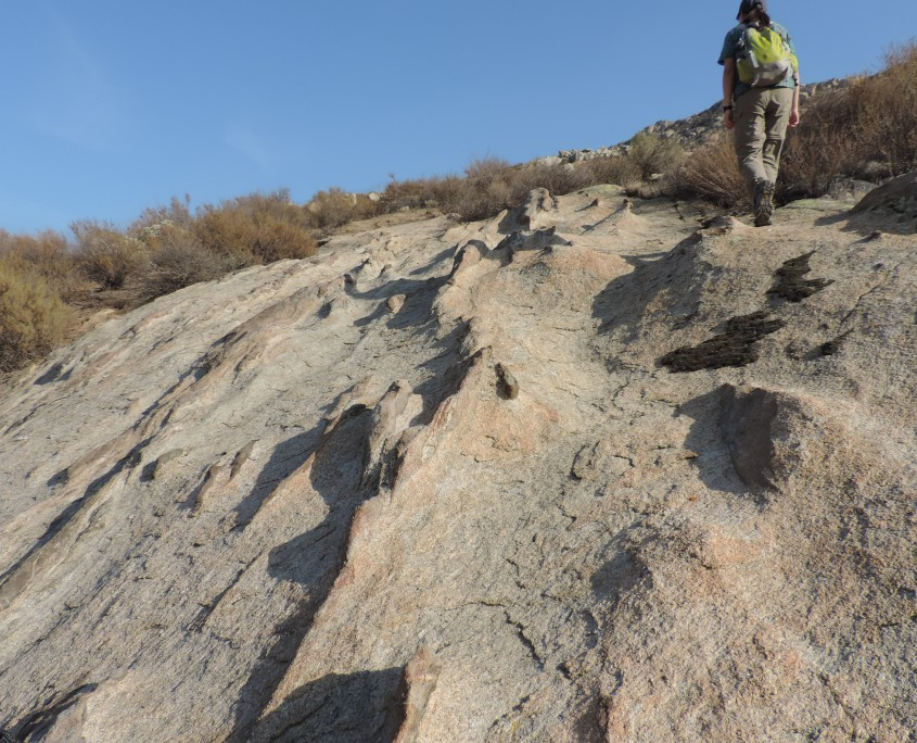 Mafic enclaves in the Bernasconi Hills Pluton in southern California. Emily Pain for scale.